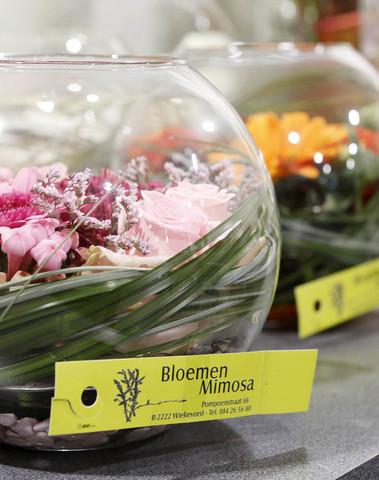 Mimosa - Bloemen
